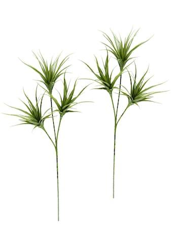 I.GE.A. Kunstpflanze »Tillandsia«, 2er Set kaufen