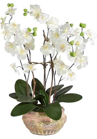 Schneider Kunstpflanze »Orchidee« kaufen