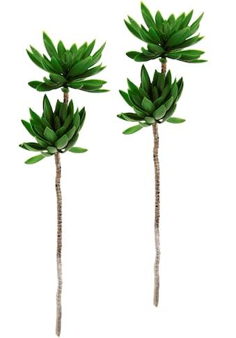 I.GE.A. Kunstpflanze »Sukkulentenzweig«, 2er Set kaufen