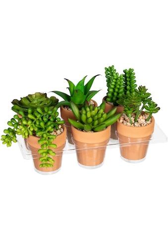 Creativ green Künstliche Zimmerpflanze »Mini-Sukkulenten«, im Tontopf, 6er Set kaufen