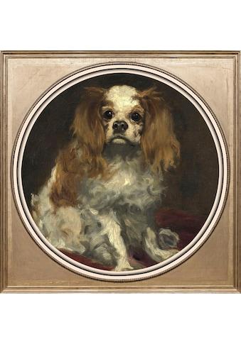 queence Acrylglasbild »Spaniel« kaufen