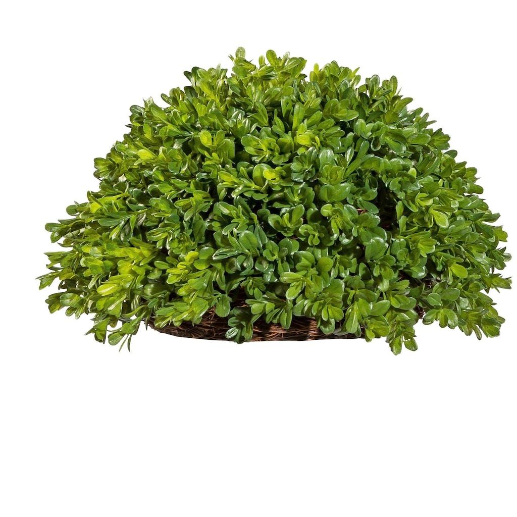 Creativ green Kunstpflanze »Buchsbaum Halbkugel«