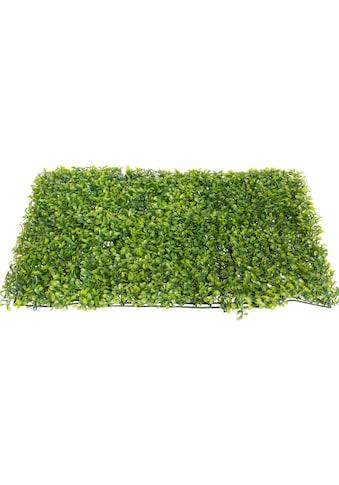 Botanic-Haus Künstliche Zimmerpflanze »Buchsmatte groß« kaufen