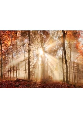 Consalnet Fototapete »Sonniger Wald im Herbst«, Motiv kaufen