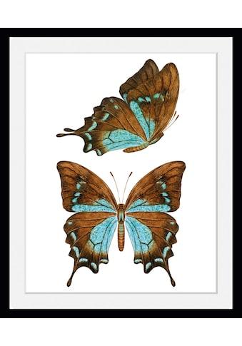 queence Bild »Nala«, Schmetterlinge, (1 St.) kaufen