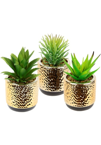 I.GE.A. Kunstpflanze »Sukkulenten-Set«, Im Keramiktopf kaufen