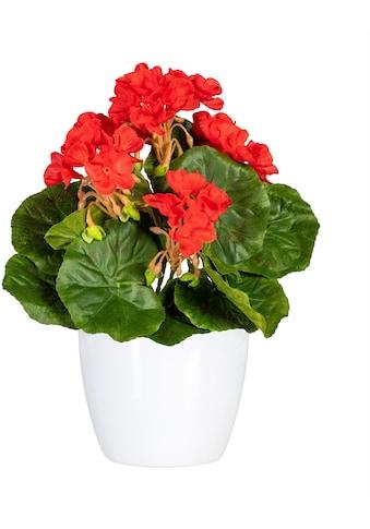 DELAVITA Künstliche Zimmerpflanze »Havel«, im Keramiktopf, 2er Set kaufen