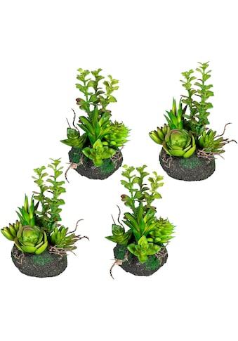 Creativ green Künstliche Zimmerpflanze »Sukkulentenarrangement«, 4er Set kaufen