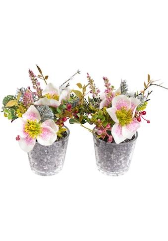Botanic-Haus Kunstblume »Christrosen-Arrangement« kaufen