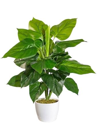 andas Künstliche Zimmerpflanze »Jarla«, im Keramiktopf kaufen