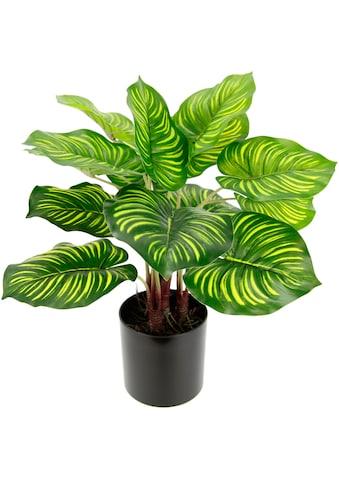 I.GE.A. Künstliche Zimmerpflanze »Maranthus« kaufen