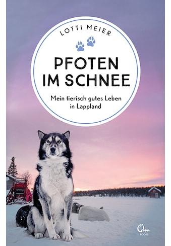 Buch »Pfoten im Schnee / Andrea Micus, Lotti Meier« kaufen