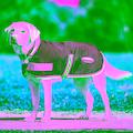 WeatherBeeta Hundemantel »1200d Therapy-tec«, Kunstleder, (1)