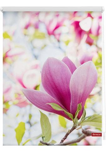 LICHTBLICK ORIGINAL Seitenzugrollo »Klemmfix Motiv Magnolie«, Lichtschutz, ohne... kaufen