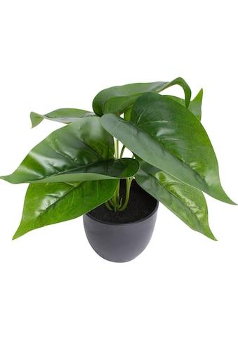 Botanic-Haus Künstliche Zimmerpflanze »Philodendron« kaufen