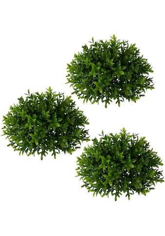 Creativ green Kunstpflanze »Buchsbaumhalbkugel«, 3er Set kaufen