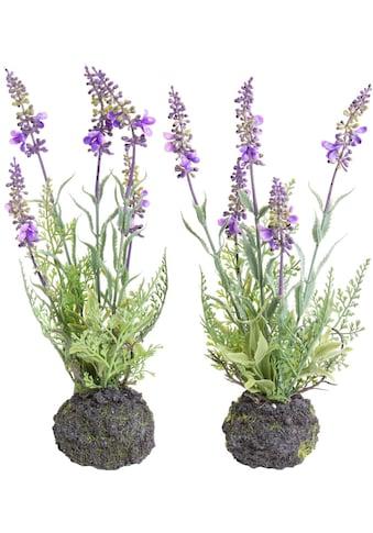 Botanic-Haus Künstliche Zimmerpflanze »Lavendel« kaufen