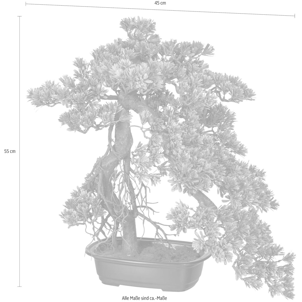 Creativ green Kunstbonsai »Bonsai Podocarpus«