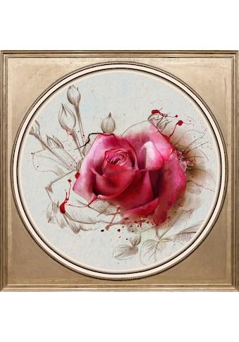queence Acrylglasbild »Rosa Rose« kaufen