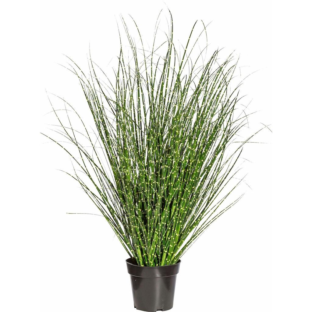 Creativ green Kunstgras »Miscanthus Zebrinus«