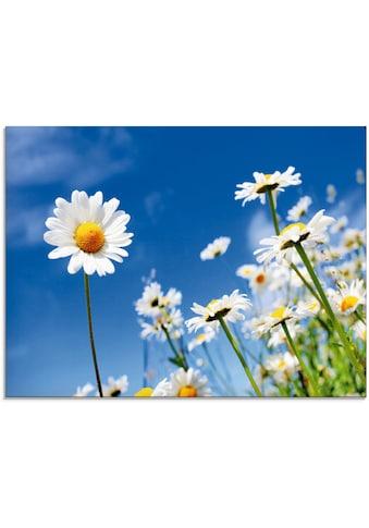 Artland Glasbild »Gänseblümchen«, Blumenwiese, (1 St.) kaufen