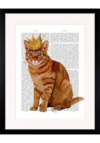 G&C Bild »NEWSPAPER CROWN CAT«, gerahmt kaufen