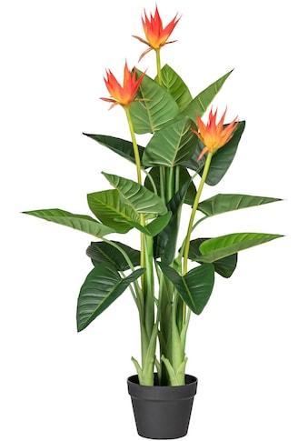 Creativ green Kunstpflanze »Guzmania« kaufen