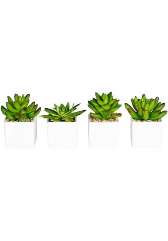 andas Künstliche Zimmerpflanze »Runa«, im Keramiktopf, 4er Set kaufen