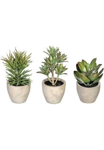 Creativ green Künstliche Zimmerpflanze »Sukkulenten«, im Zementtopf, 3er Set kaufen