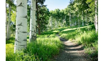 Papermoon Fototapete »Birkenbaumpfad«, Vliestapete, hochwertiger Digitaldruck kaufen