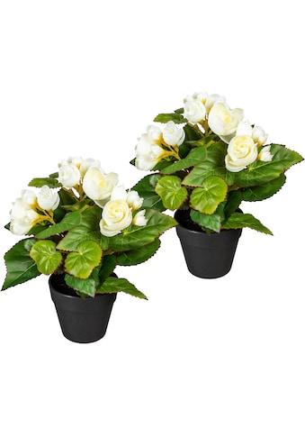 DELAVITA Künstliche Zimmerpflanze »Eleonore«, 2er Set kaufen