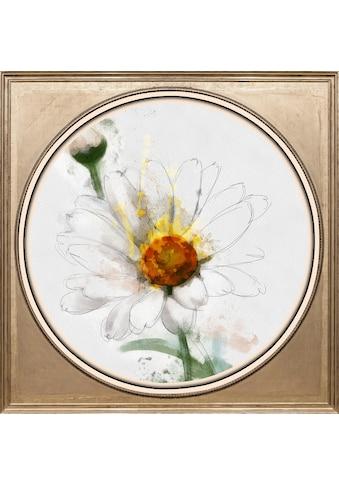 queence Acrylglasbild »Weiße Blüte« kaufen