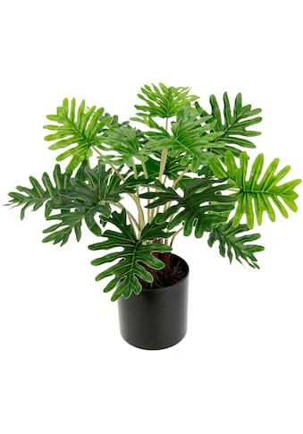 I.GE.A. Künstliche Zimmerpflanze »Philo« kaufen