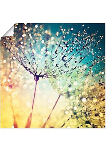 Artland Wandbild »Pusteblume Zaubertropfen«, Blumen, (1 St.), in vielen Größen &... kaufen