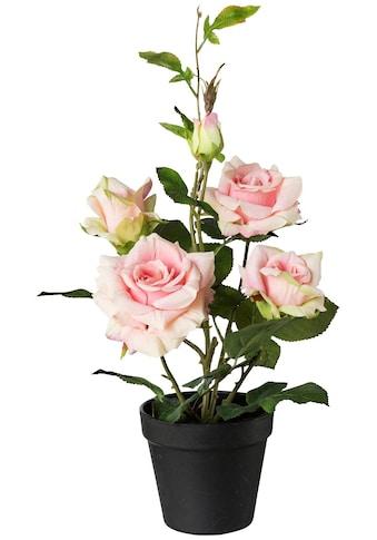 Creativ green Kunstpflanze »Rosenbusch«, im Topf kaufen