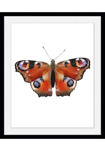 queence Bild »Lena«, Schmetterlinge, (1 St.) kaufen