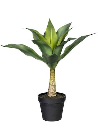 Creativ green Künstliche Zimmerpflanze »Agave mit Stamm« kaufen