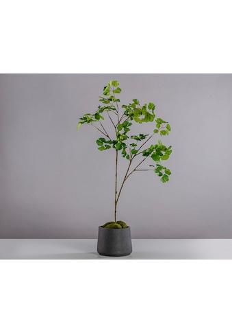 Blütenwerk Künstliche Zimmerpflanze »Gingko« kaufen