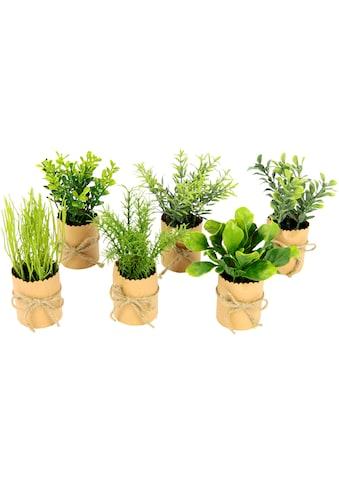 I.GE.A. Kunstpflanze »Kräutersortiment«, im Papiertopf, mit Juteband, 6er Set kaufen