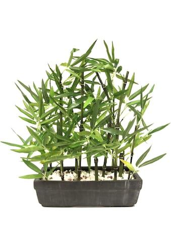 I.GE.A. Kunstpflanze »Bambus«, Mit Natursteinen kaufen