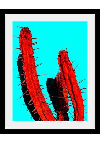 queence Bild »Kaktus« kaufen